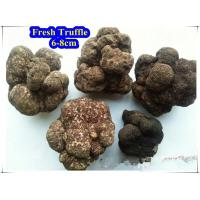 Buy cheap Truffle Fresh Truffle from wholesalers
