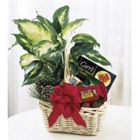 China Holiday Hospitality Basket - B8-3730 wholesale