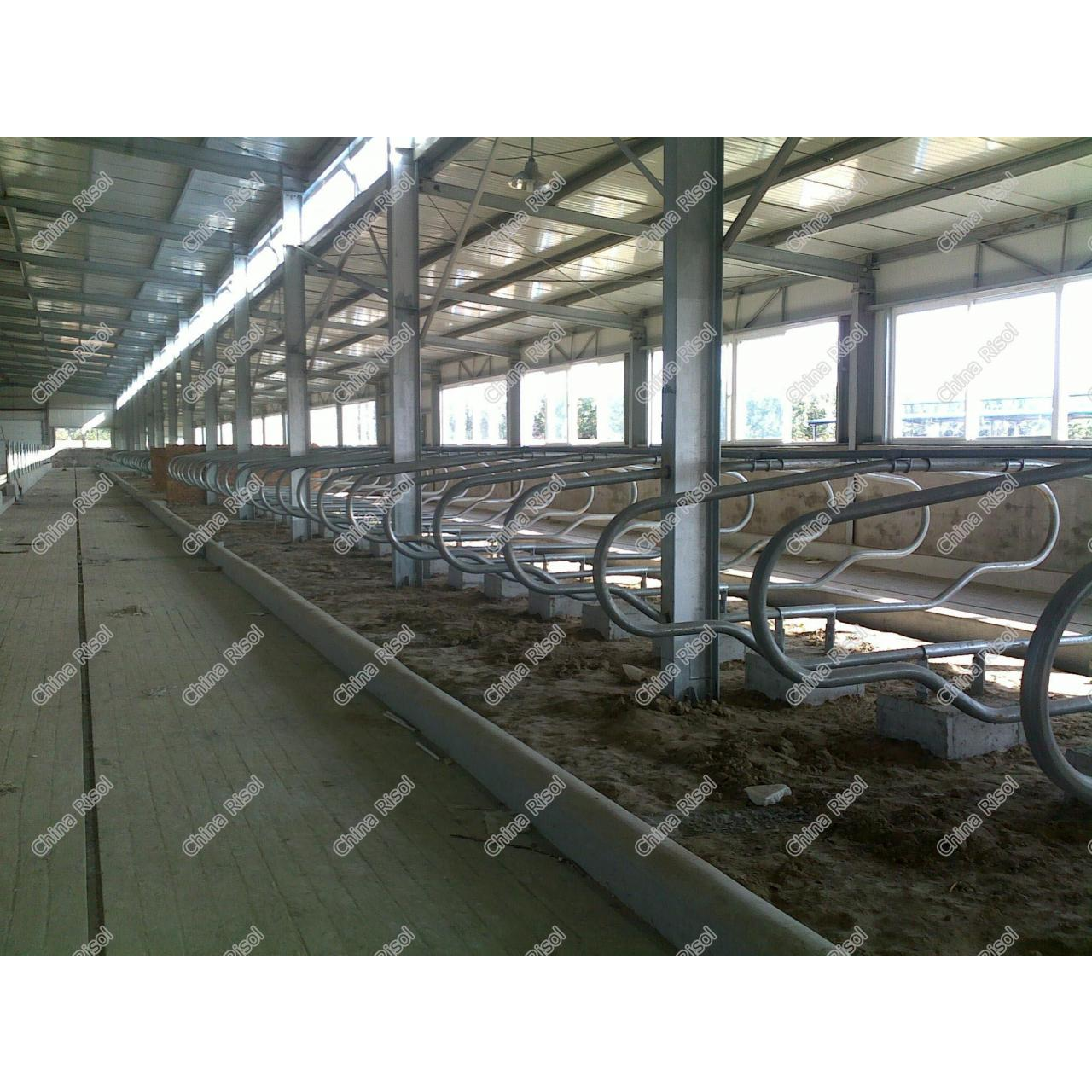 Cattle free stall