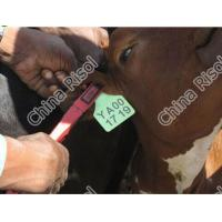 Cattle/Cow ear tag