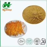 China Cordyceps Sinensis Extrac Plant&herb Extract wholesale
