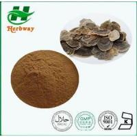 China Coriolus Versicolor Extra Plant&herb Extract wholesale