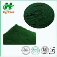 China Spirulina Extract Plant&herb Extract wholesale
