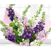 Buy cheap Flowers Scented Summer Stocks from wholesalers