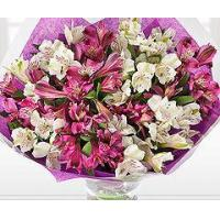 Buy cheap Flowers Purple and Cream Alstroemeria from wholesalers