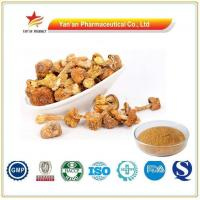 China Wholesale Agaricus Blazei Powder/Top Quality Agaricus Blazei Mushroom Extract wholesale