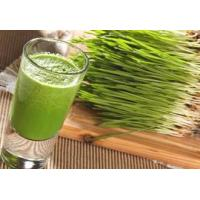 Buy cheap Organic Super Greens Organic Wheatgrass Juice Powder from wholesalers