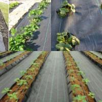 China PP/PE woven weed control mats wholesale