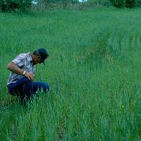 Buy cheap Browse by Common Name Cereal Rye Grain from wholesalers