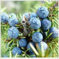 Buy cheap Essential oils Juniper berry essential oil from wholesalers
