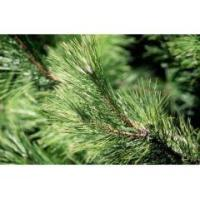Buy cheap Aromatic waters Pine essential water from wholesalers