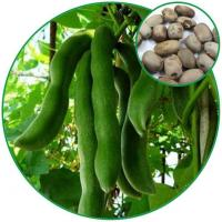 China Velvet Bean, Preventing Parkinson's Disease and Neuralgia Chinese Herbal Medicine wholesale