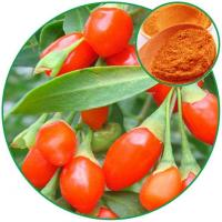 China Goji Berry Powder,with Effective Ingredient Lycium Barbarum Polysaccharides(Goji Poly wholesale