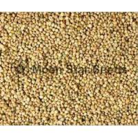 Buy cheap Guar Seeds from wholesalers