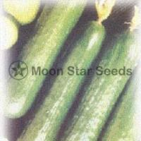 Buy cheap Thai Cucumber Seeds from wholesalers