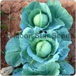 Buy cheap Cabbage from wholesalers