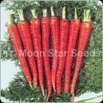Buy cheap M/S Carrot Seeds from wholesalers