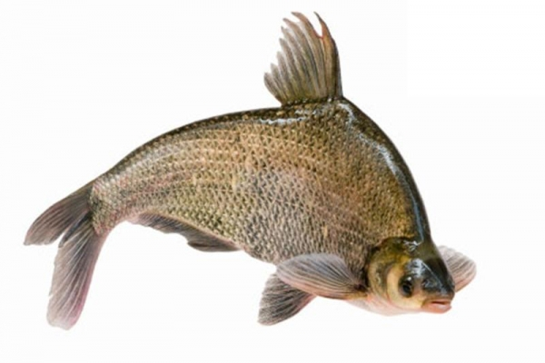 Quality Bream for sale